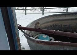 Enlace a Este hombre usa su propio aliento para salvar a un pobre gorrión congelado