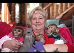 Enlace a La madre de los monos que cuida de ellos como nadie