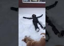 Enlace a El perro que quería imitar a su dueño haciendo el ángel en la nieve