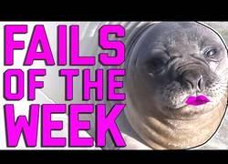 Enlace a Los mejores y más divertidos fails de la semana