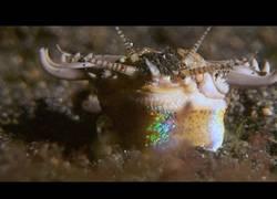Enlace a El terrible monstruo marino que mata sin esperártelo en el fondo del océano