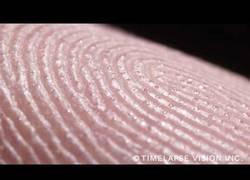 Enlace a Así se ven de cerca y con mucho detalle las glándulas sudoríparas de las huellas dactilares