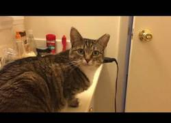 Enlace a El gato que reacciona cada vez que le preguntan si tiene hambre