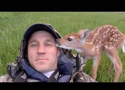 Enlace a Salva a una cría de ciervo y la devuelve al bosque