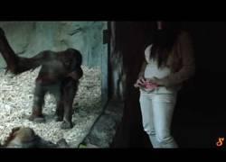 Enlace a Esta chica se quita la ropa frente a unos monos y su reacción es la esperada...