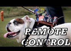 Enlace a Este ingeniero crea un control remoto para llevar a su perro donde quiera
