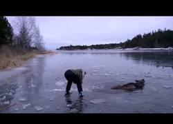 Enlace a Salvan un alce a punto de morir congelado en este enorme lago