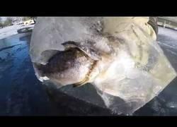 Enlace a Esto ocurre cuando picas un gran trozo de hielo en un lago helado