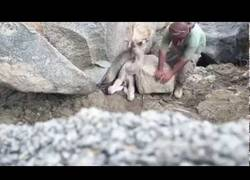 Enlace a El cazador que salvó a un bebé de dromedario atrapado en una enorme piedra