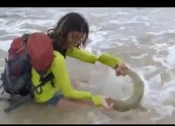 Enlace a Saca un tiburón del agua para un selfie y el karma no tarda en actuar