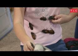 Enlace a La niña que era fan de tener cucarachas gigantes