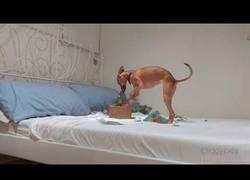 Enlace a Nada como la felicidad e insistencia de un perro abriendo un regalo para él