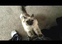 Enlace a Gatos pidiendo un poco de atención, es su gran oficio