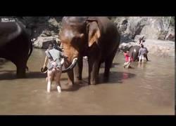 Enlace a Hacer enfadar a un elefante es de las peores cosas que puedes hacer en tu vida