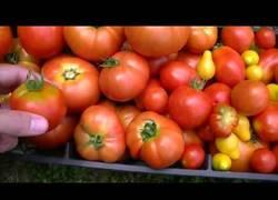Enlace a El vídeo que los vegetarianos no quieren que veas