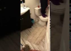 Enlace a Mujeres usan el juego en equipo para expulsar a una rata de su apartamento