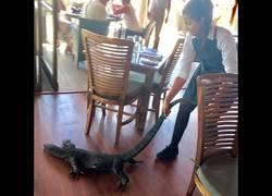 Enlace a Se le cuela un Dragón de Komodo y la camarera no duda en echarlo así del restaurante