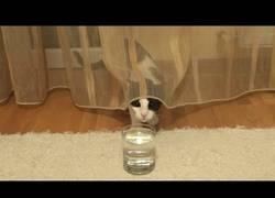 Enlace a La curiosidad de este gato al toparse con un vaso de agua con gas