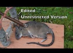 Enlace a Curiosa trampa española para ratas que se ha usado durante cientos de años
