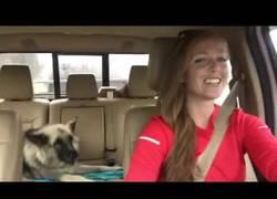 Enlace a Empieza a cantar en el coche y su perro hace los coros con la canción