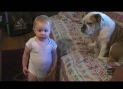Enlace a Los perros y bebés son los mejores amigos