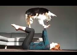 Enlace a Este perro sabe hacer todas las actividades que existen en la vida