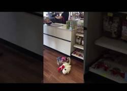 Enlace a Este perrito encontró su mejor amigo en forma de peluche en esta tienda