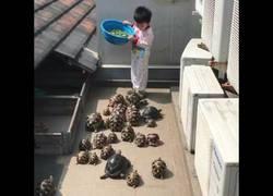 Enlace a La hora de la comida para una plaga de tortugas