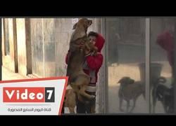 Enlace a Abderramán, el niño egipcio cuya única compañía son los perros... y su sudadera del Real Madrid