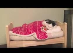 Enlace a Le fabrican una cama a este gato al estilo de un humano y es lo más adorable que verás hoy