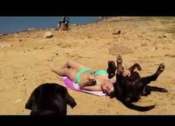 Enlace a No es fácil tomar el sol en la playa con un labrador