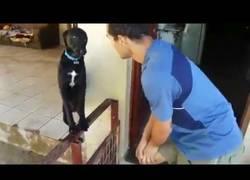Enlace a El perro culpable que busca el perdón de su amo