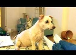 Enlace a Al gato que le explotó la cabeza al ver el nuevo corte de pelo del perro