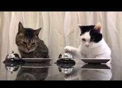 Enlace a Estos gatos tienen hambre, pero también mucha educación