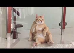 Enlace a Porque descansar como un gatito es demasiado mainstream