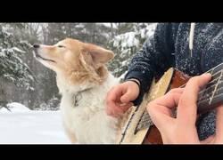 Enlace a Sale con su perro un día nevado y hace un cover mágico de un tema de La La Land