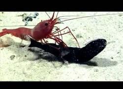 Enlace a TREMENDO: Esta gamba mata a un pez y encuentra dentro del cuerpo una sorpresa