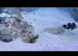 Enlace a Este pez es el troll del mar