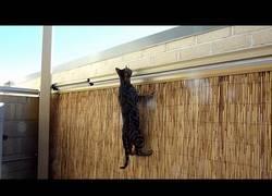Enlace a La trampa definitiva para que tu gato no escale