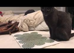 Enlace a La curiosa reacción de este gato al ver una ilusión óptica en un papel