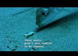 Enlace a El pez globo japonés, es uno de los artistas del reino animal