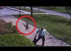 Enlace a El ganso antisistema que odiaba a la policía y le atacó en plena calle