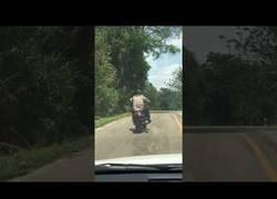 Enlace a WTF: Una serpiente trata de atacar a un motorista al invadir su zona