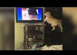 Enlace a El perro que quería jugar con el que salía en la TV