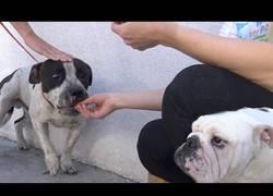 Enlace a Encuentran un perro abandonado con mucho miedo y se ganan su confianza con una cheeseburger