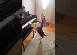 Enlace a El beagle que se compone su propia música para cantar junto a su piano