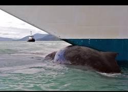 Enlace a Marinero salta al mar desde un petrolero para salvar a una ballena enredada