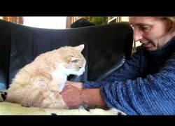 Enlace a Mujer enseña como limpiar a un gato de 18 años para estar bien limpio