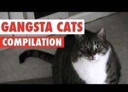 Enlace a Los gatos, esos animales que no temen a la muerte ante estos peligros