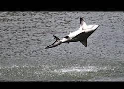 Enlace a Tiburones saltarines como delfines